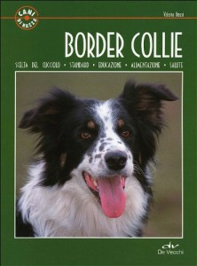 addestrare-un-border-collie