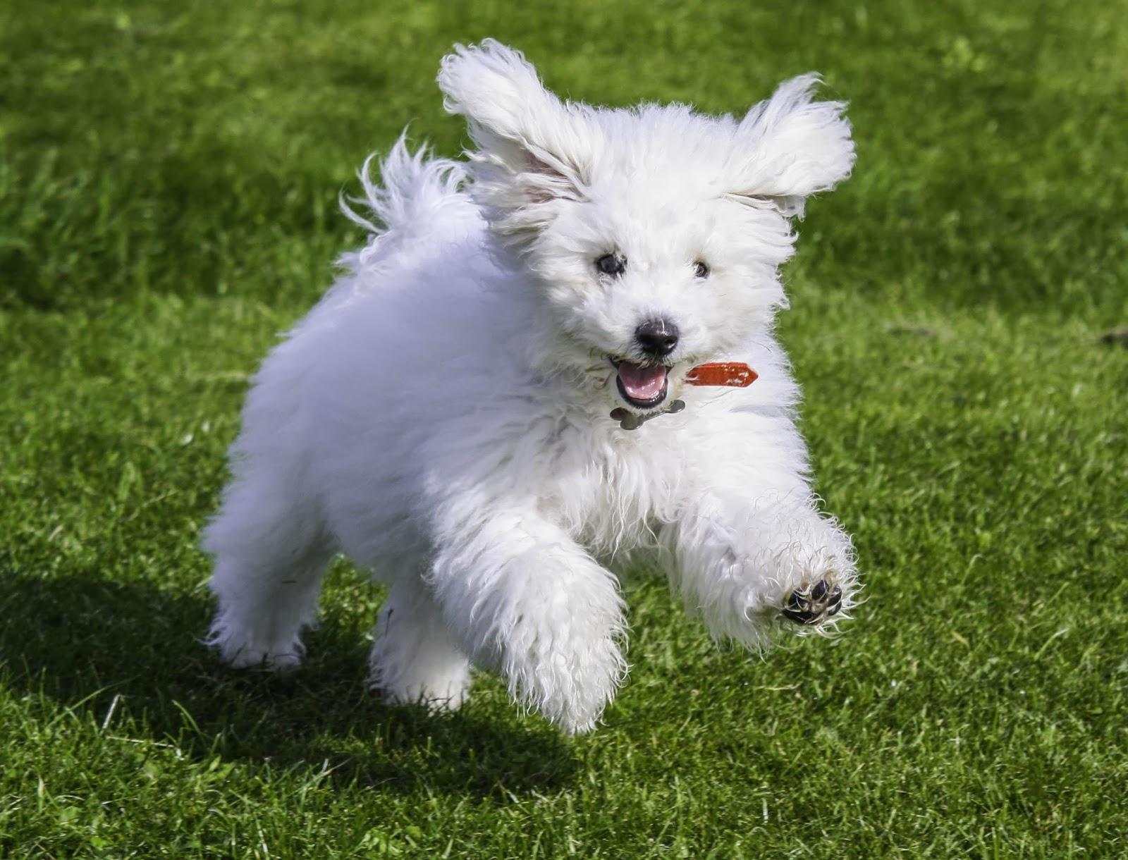 Accessori per cani: tutto quello che serve sapere